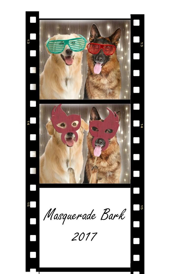 Cat - Masquerade Bark 2017