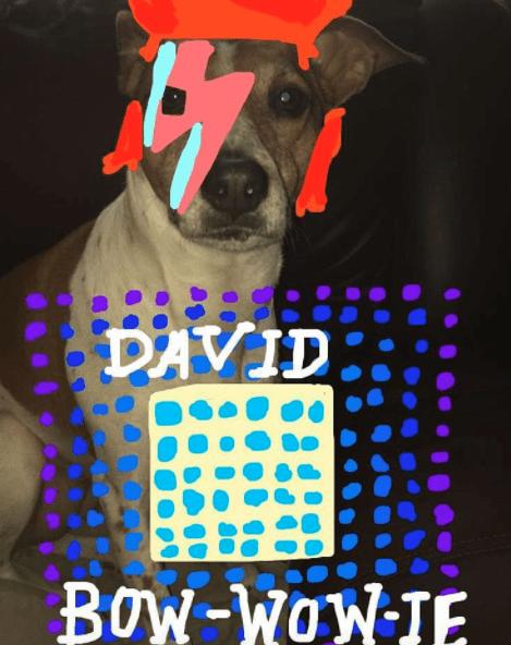 Dog - DAVID BOW-WOW IE