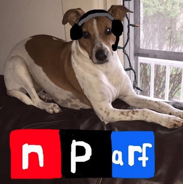 Dog - n p a rf