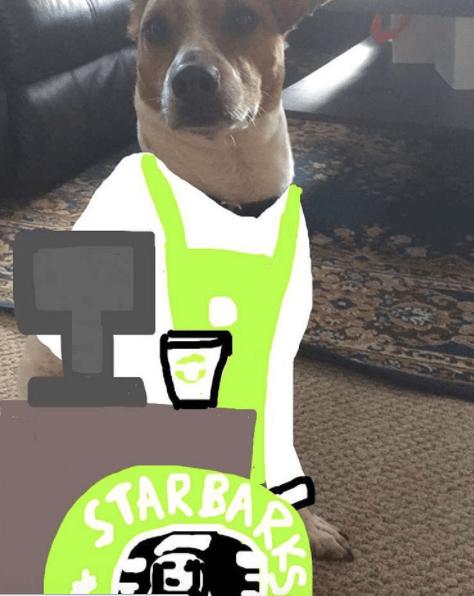 Dog - STARBA