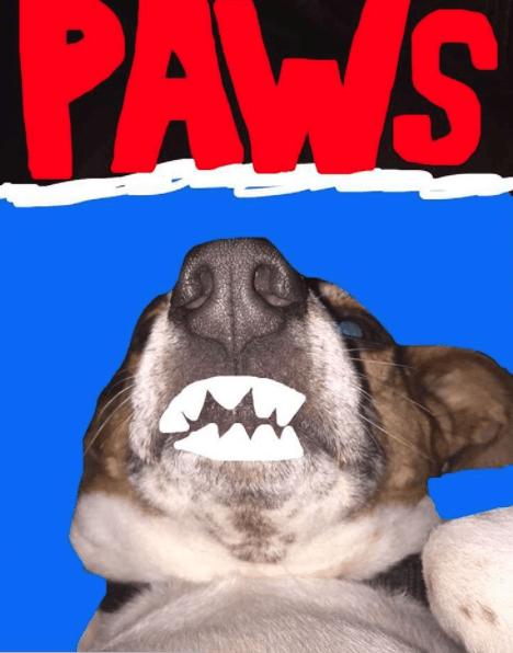 Snout - PAWS