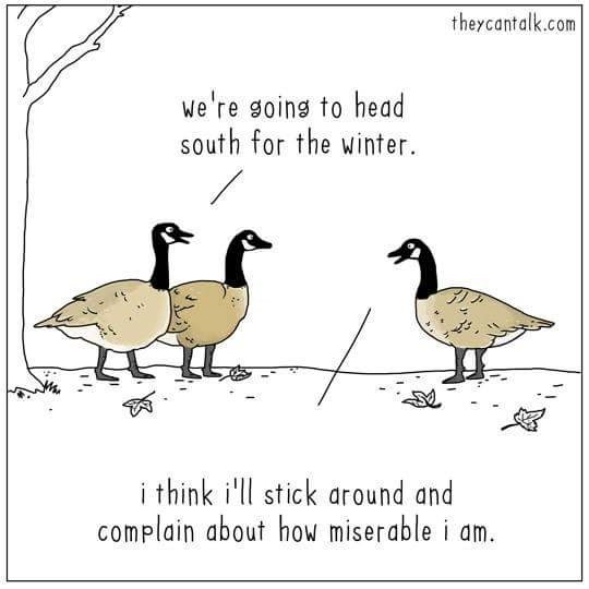 Bird - theycantalk.com We're goins to head south for the winter. アア i think i'll stick around and complain about how miserable i am.