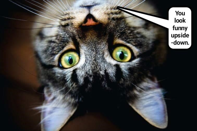 cat look caption funny upside down - 9007985664