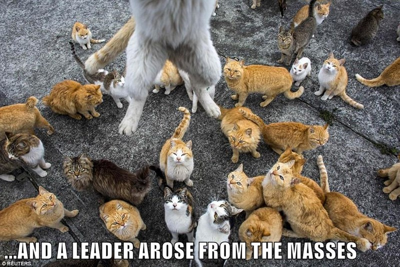 cat,arose,caption,masses,leader