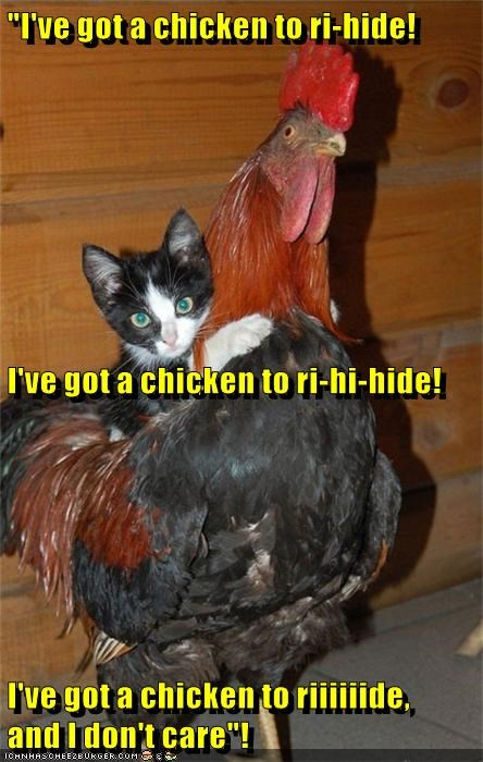 ride chicken dont-care kitten caption got - 9008115456