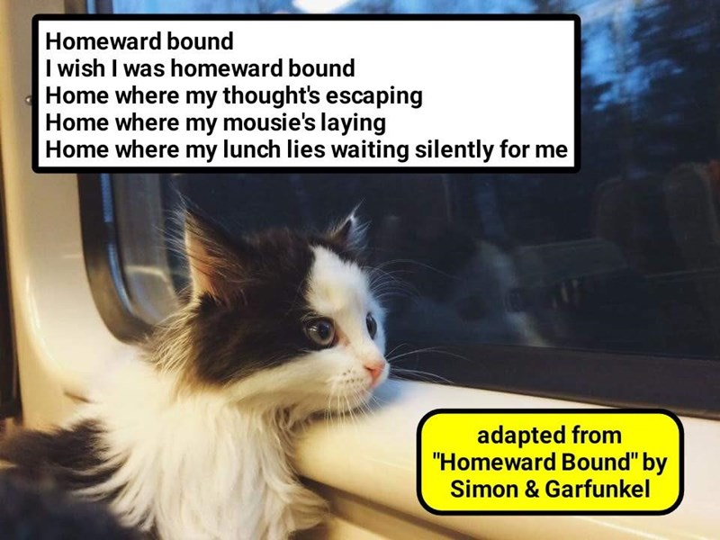 cat,mousie,me,waiting,silently,bound,homeward,caption