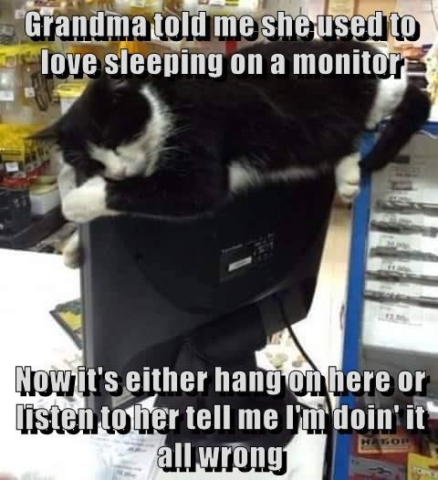 cat used grandma monitor love told me caption sleeping - 9008193024