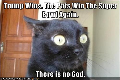 cat Pats wins super bowl trump no god caption win - 9008216832