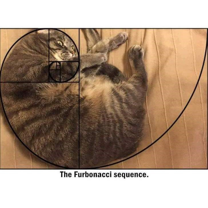 cat curled perfectly in the shape of the Fibonacci spiral