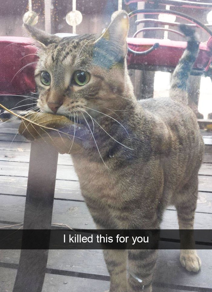 snapchat - Cat - I killed this for you