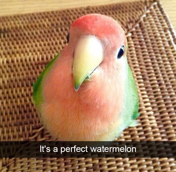 snapchat - Bird - It's a perfect watermelon