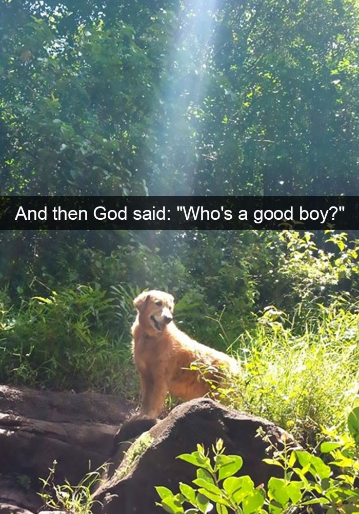 "snapchat - Golden retriever - And then God said: ""Who's a good boy?"""
