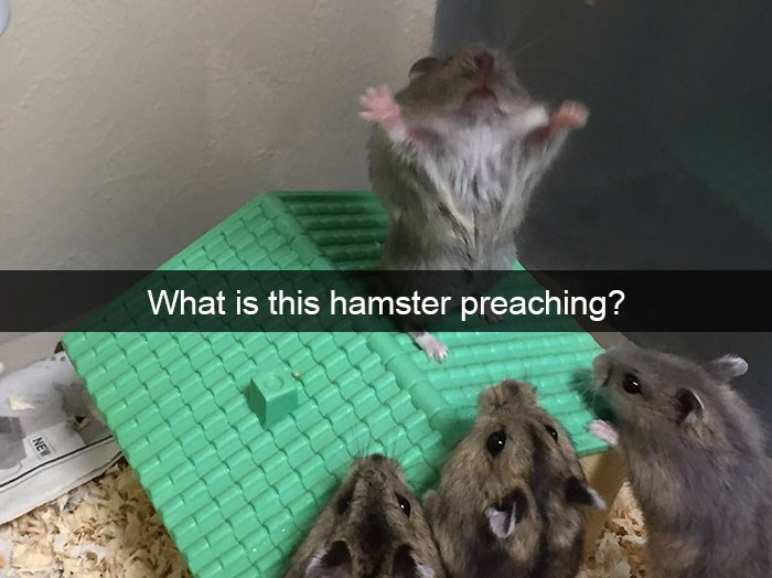 snapchat - Rat - What is this hamster preaching? NEW