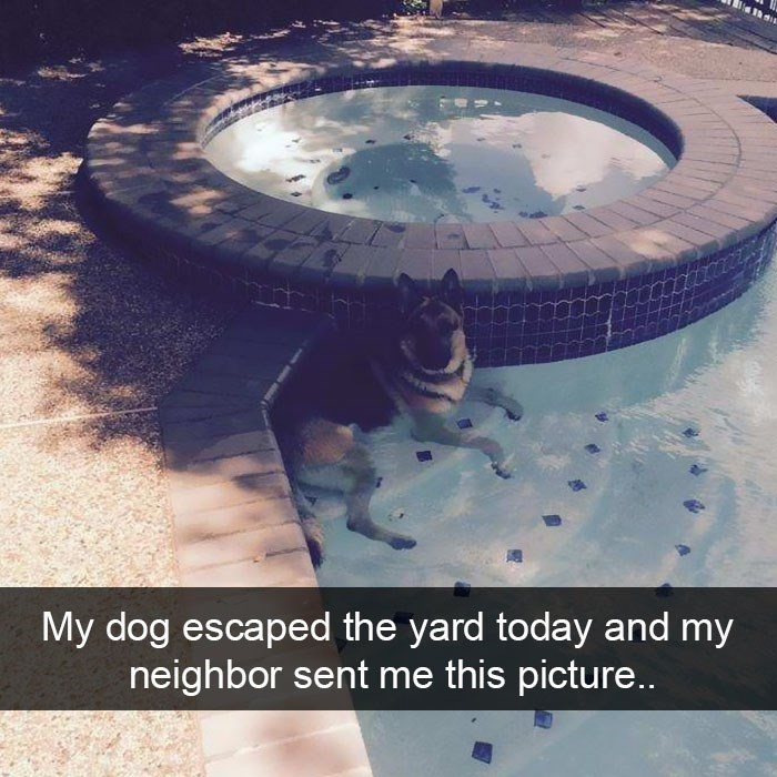 snapchat - Sky - My dog escaped the yard today and my neighbor sent me this picture...