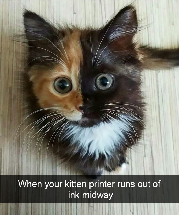snapchat - Cat - When your kitten printer runs out of ink midway