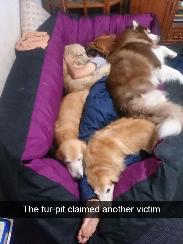 snapchat - Dog - The fur-pit claimed another victim