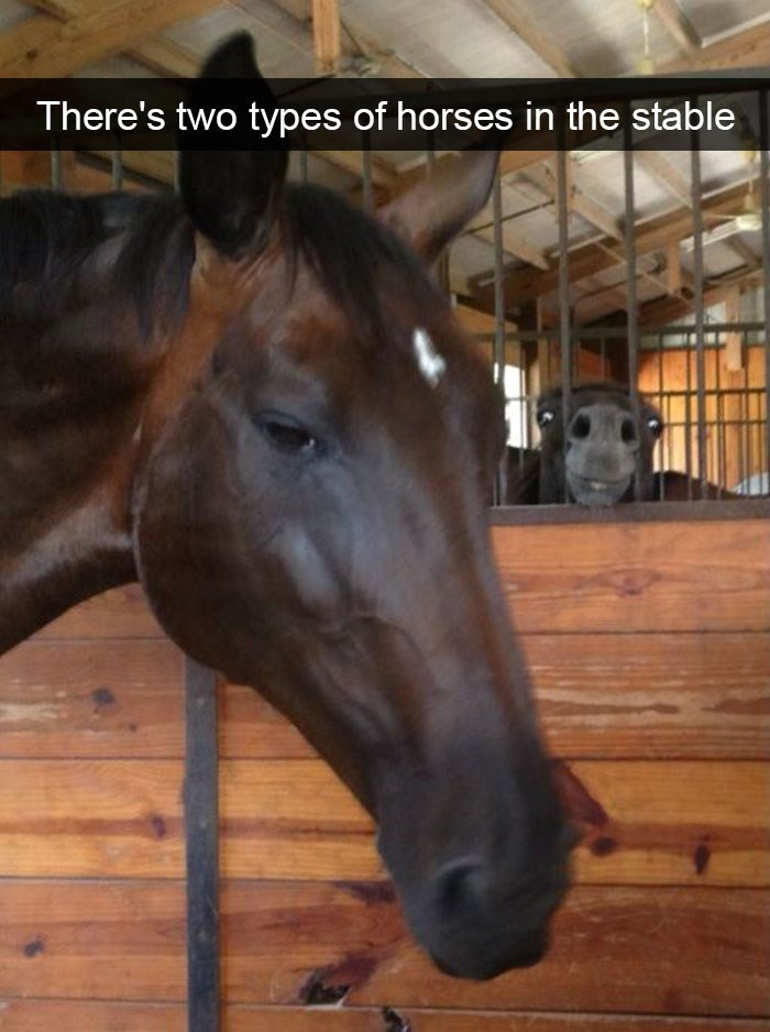 snapchat - Horse - There's two types of horses in the stable