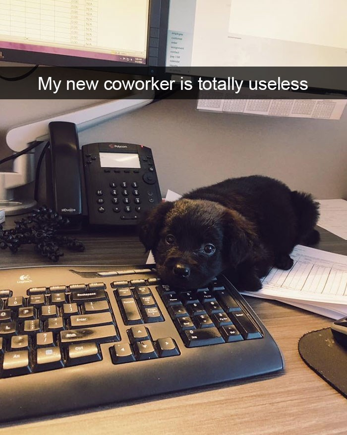snapchat - Canidae - NA NA NA 00 NA NA A ig coworker is totally useless My new Polyom 1 HOvoice Bnder An