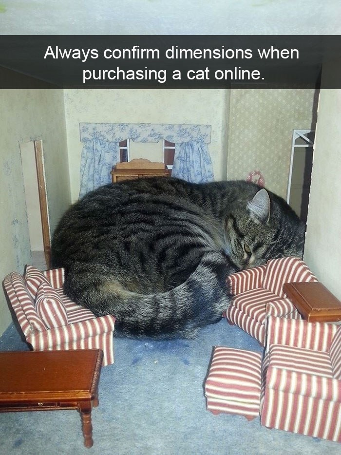 snapchat - Cat - Always confirm dimensions when purchasing a cat online.