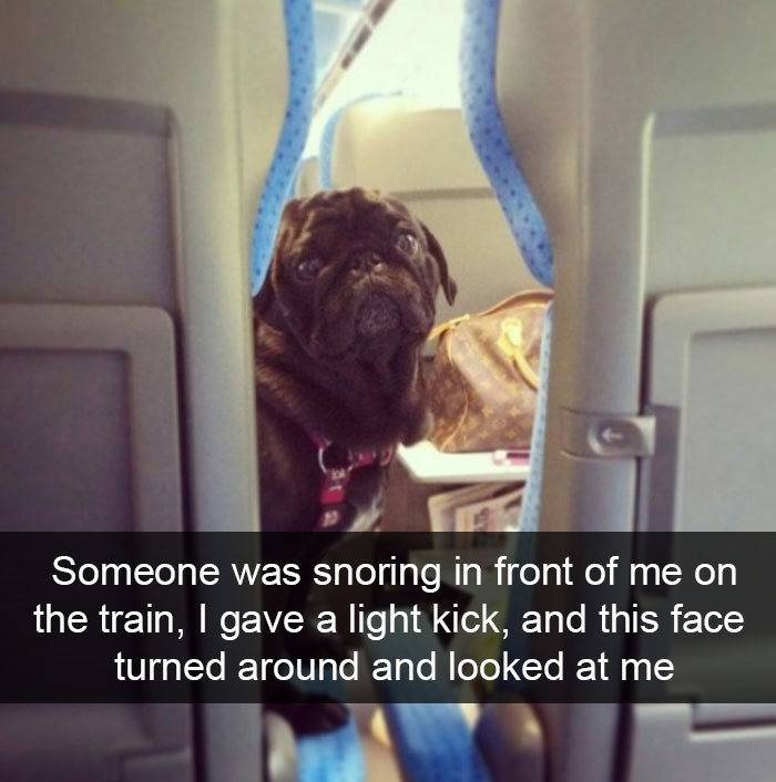 snapchat - Photography - Someone was snoring in front of me on the train, I gave a light kick, and this face turned around and looked at me