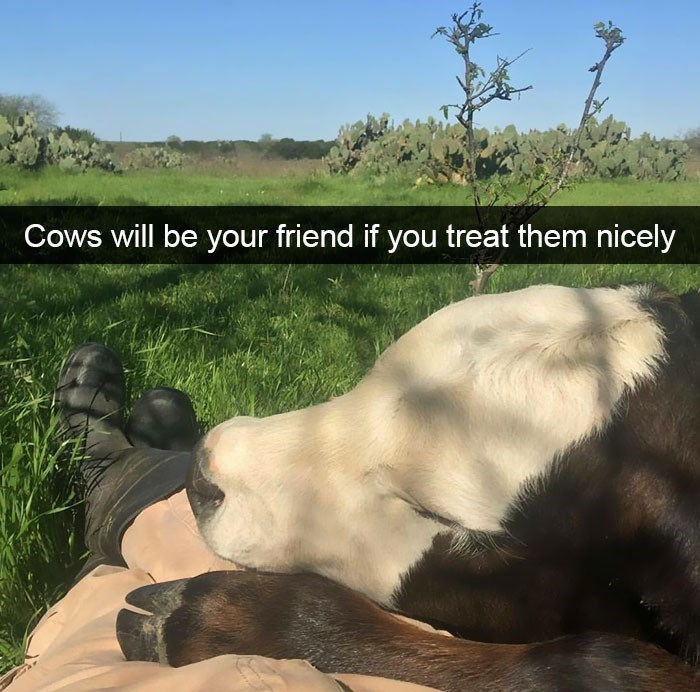snapchat - Wildlife - Cows will be your friend if you treat them nicely
