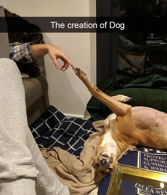 snapchat - Fawn - The creation of Dog PROTEC SUPPOR CUSHIO &WARA FLEA RE