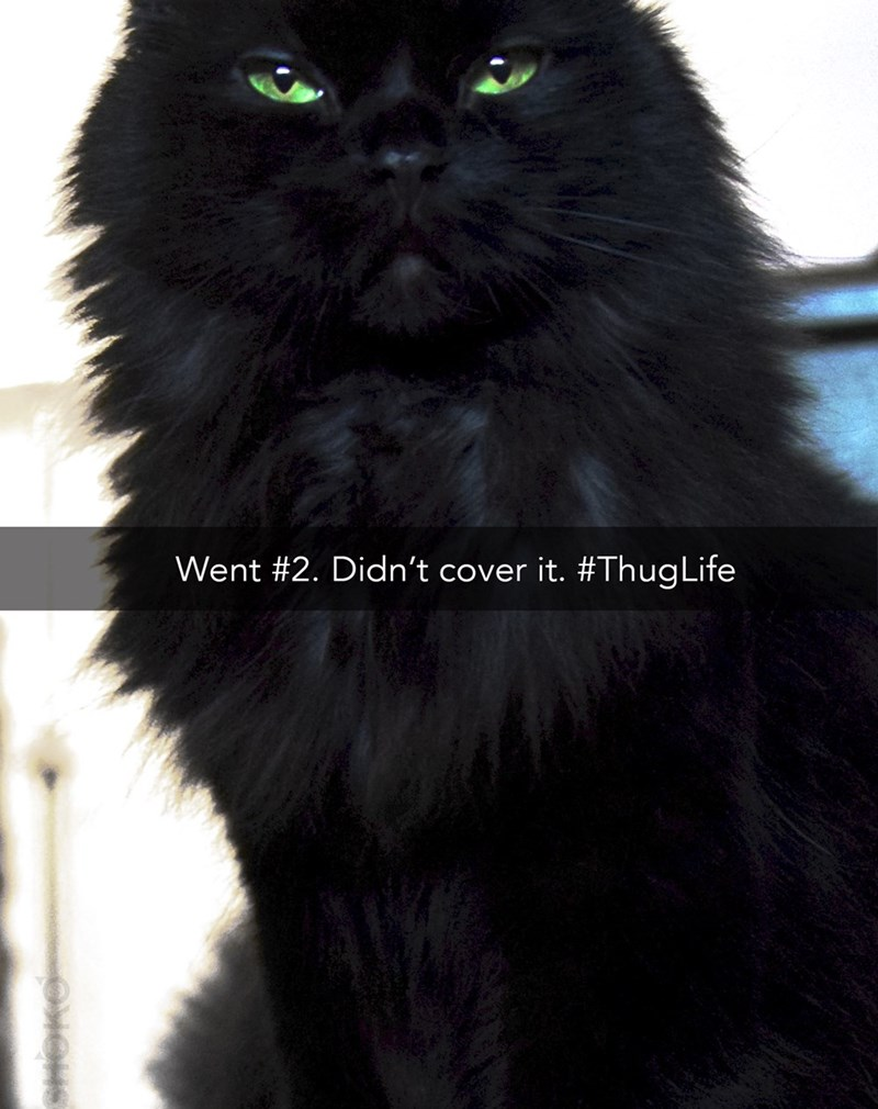snapchat - Cat - Went #2. Didn't cover it. #ThugLife