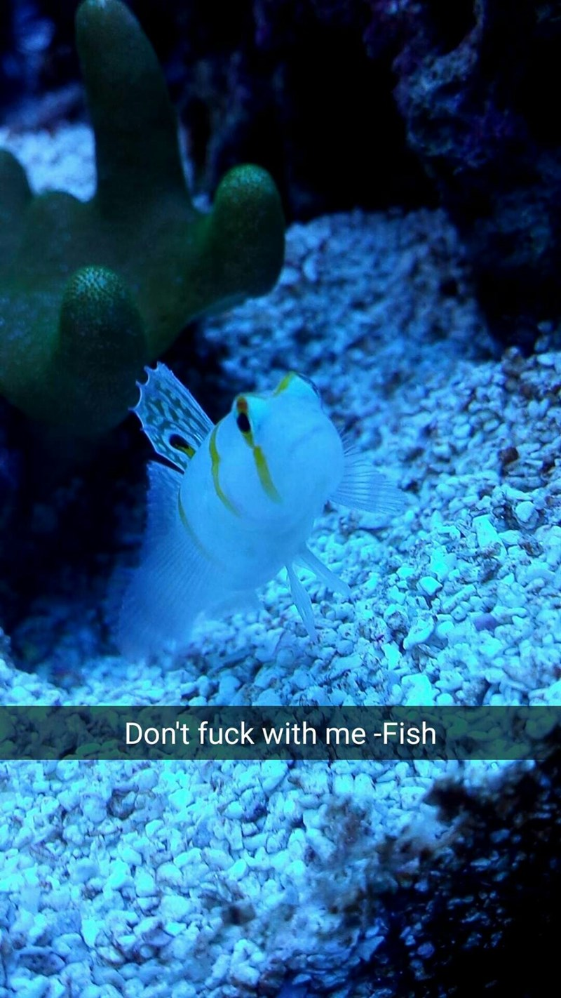 snapchat - Organism - Don't fuck with me -Fish