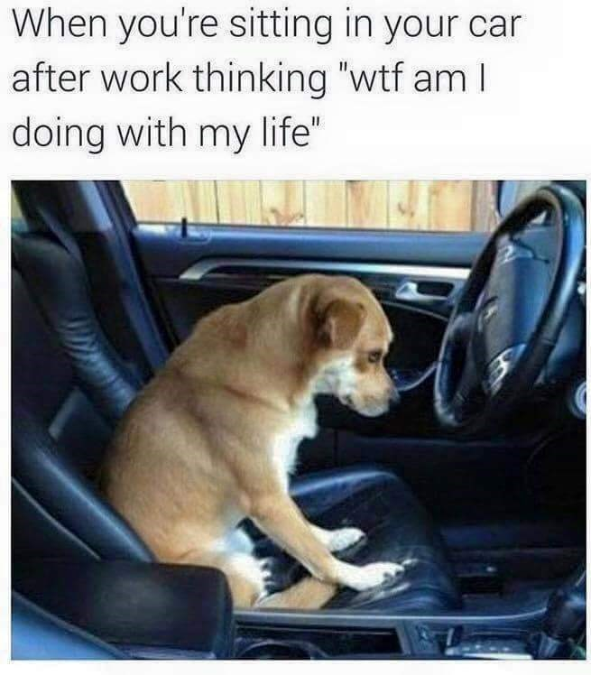 """work meme - Vehicle door - When you're sitting in your car after work thinking """"wtf am I doing with my life"""""""