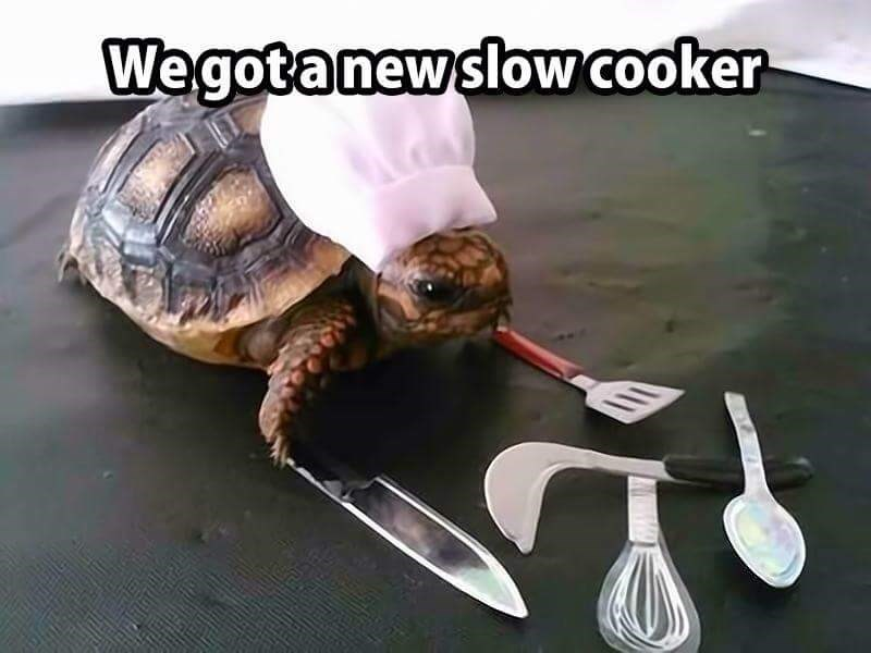 work meme - Tortoise - Wegotanewslow cooker