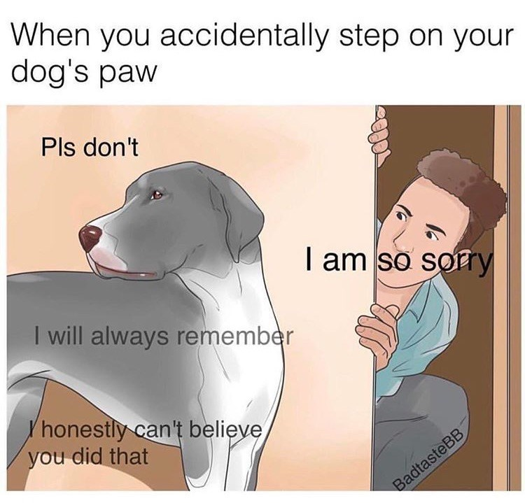 Dog - When you accidentally step on your dog's paw Pls don't I am so sorry I will always remember honestly can't believe you did that BadtasteBB