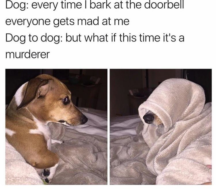 Dog - Dog: every time l bark at the doorbell everyone gets mad at me Dog to dog: but what if this time it's a murderer