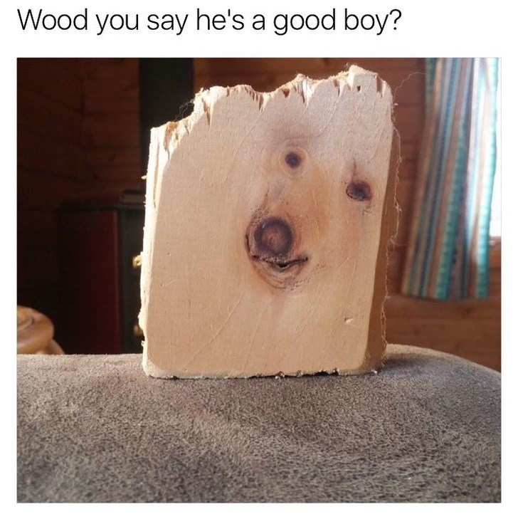 Dog - Wood you say he's a good boy?