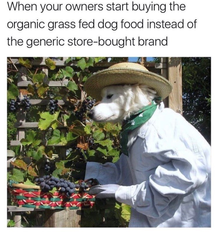 Adaptation - When your owners start buying the organic grass fed dog food instead of the generic store-bought brand