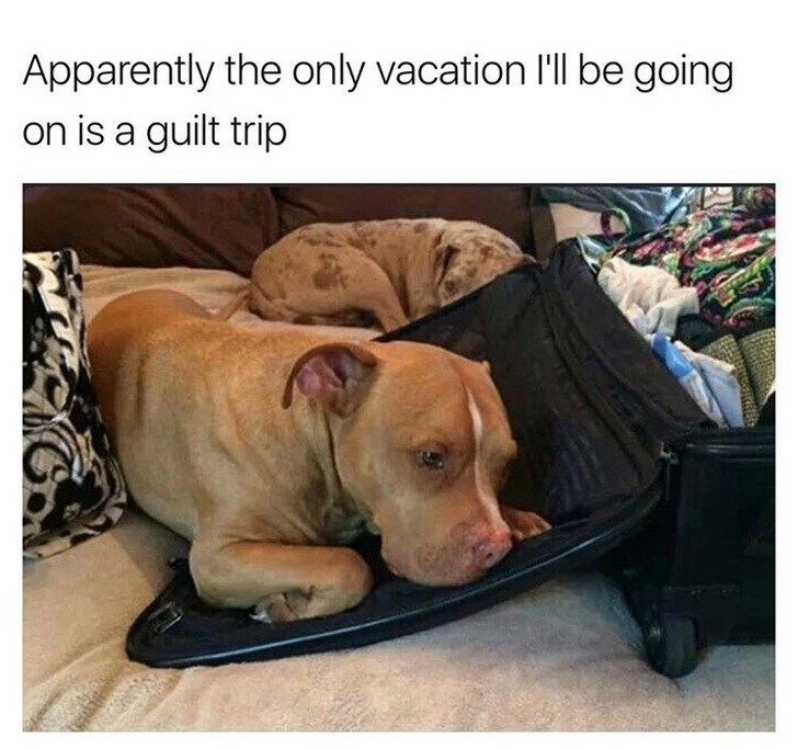 Dog - Apparently the only vacation l'll be going on is a guilt trip