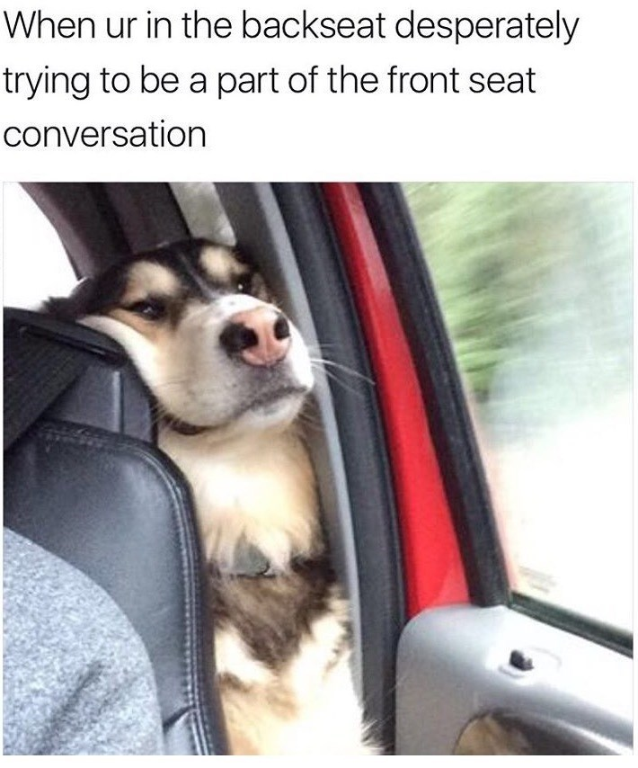 Dog - When ur in the backseat desperately trying to be a part of the front seat conversation