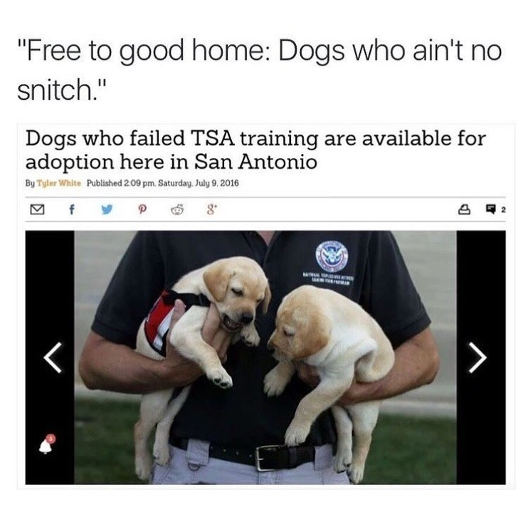 "Dog breed - ""Free to good home: Dogs who ain't no snitch."" Dogs who failed TSA training are available for adoption here in San Antonio By Tyler White Published 209 pm. Saturday, July 9, 2016 f P 8"