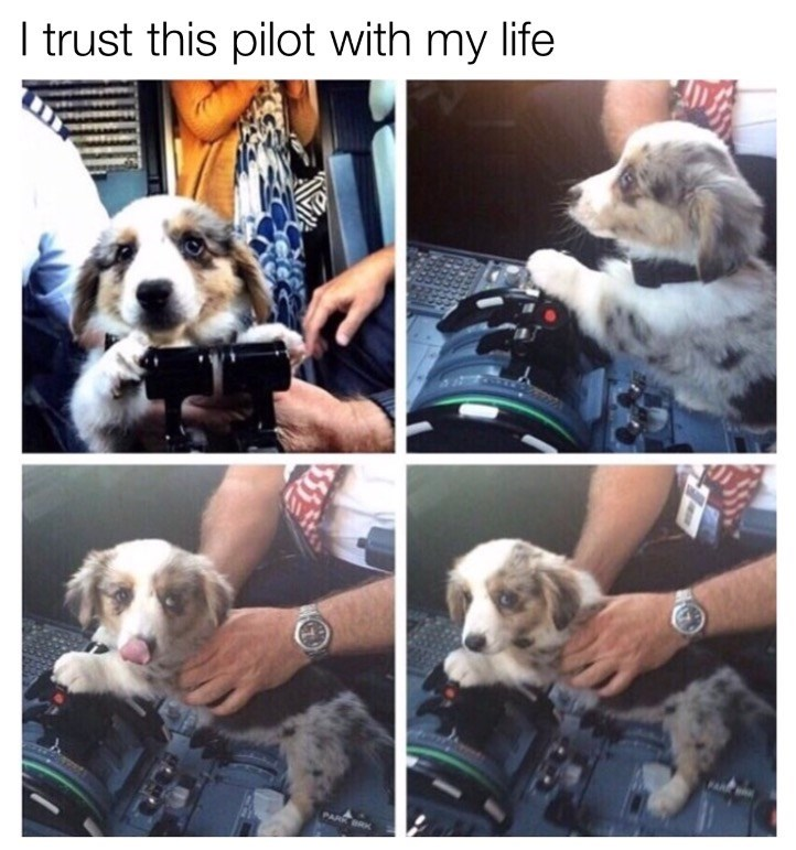 Dog - I trust this pilot with my life PARR BR