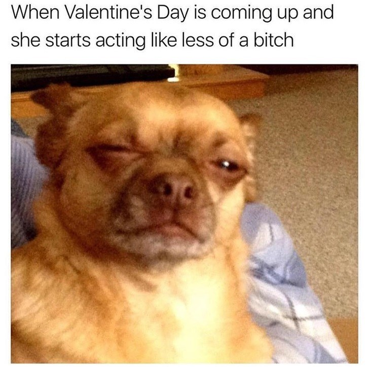 Dog - When Valentine's Day is coming up and she starts acting like less of a bitch