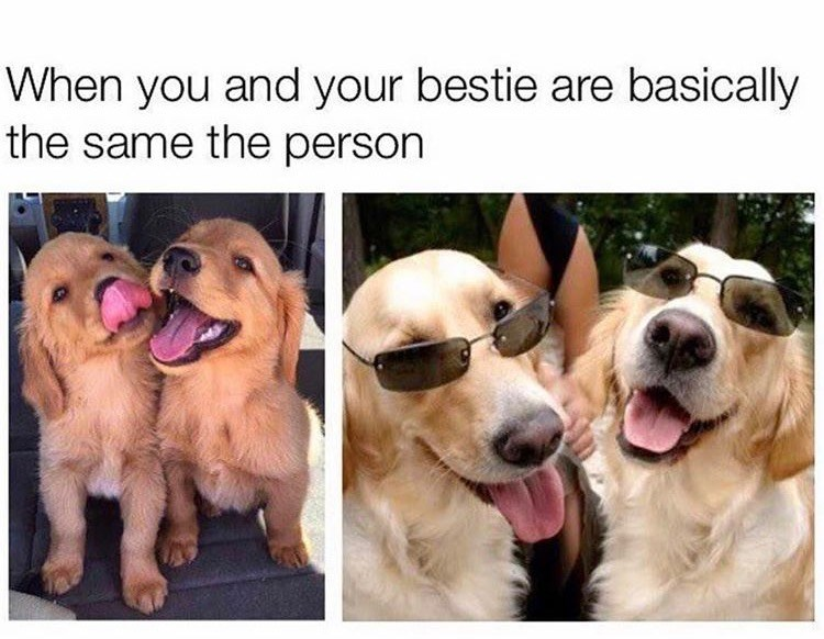 Dog breed - When you and your bestie are basically the same the person