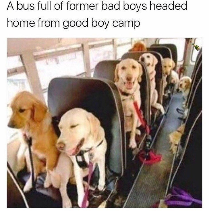 Facial expression - A bus full of former bad boys headed home from good boy camp