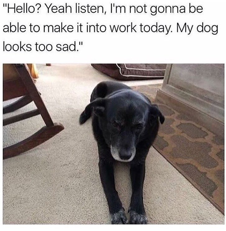 "Dog - ""Hello? Yeah listen, I'm not gonna be able to make it into work today. My dog looks too sad."""