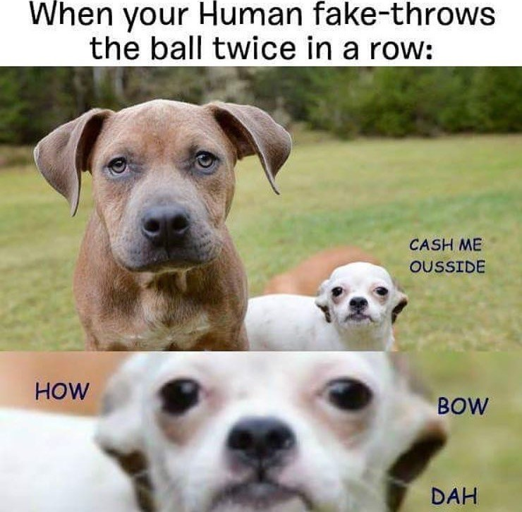 Dog - When your Human fake-throws the ball twice in a row: CASH ME OUSSIDE HOW BOW DAH