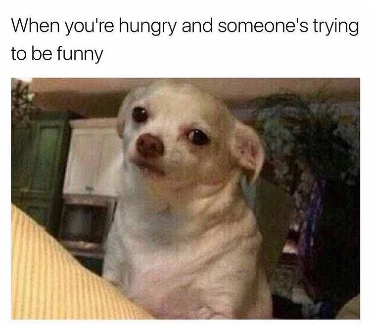 Dog - When you're hungry and someone's trying to be funny