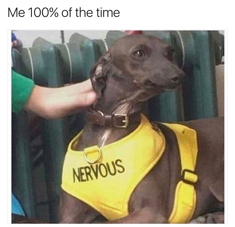 Dog - Me 100% of the time NERVOUS