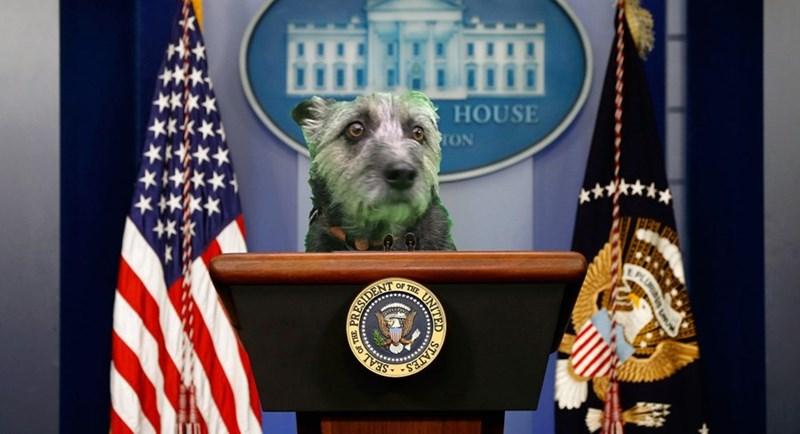 Dog - HOUSE rON ESIDENICE SEAL STAFES (