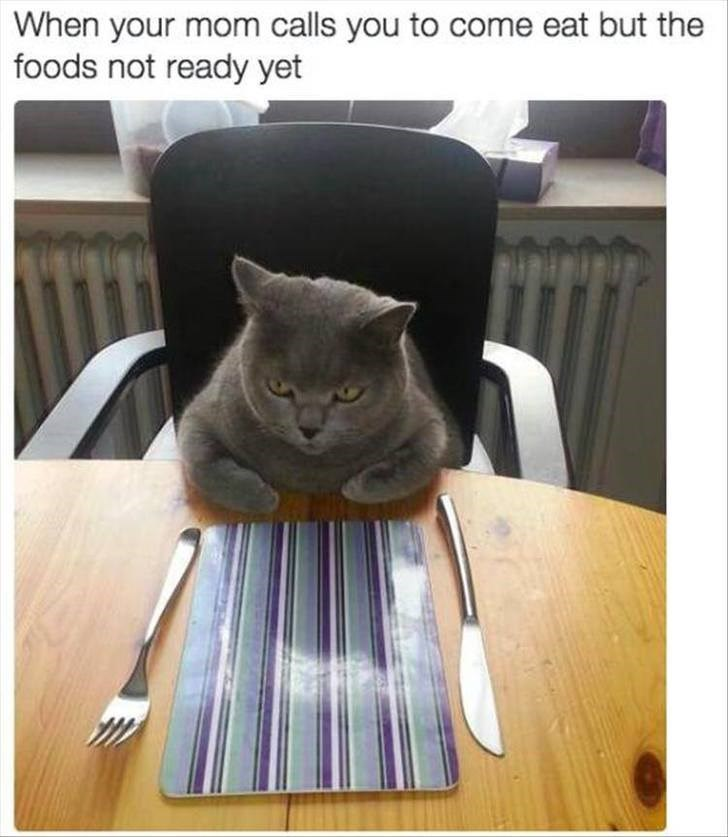Cat - When your mom calls you to come eat but the foods not ready yet