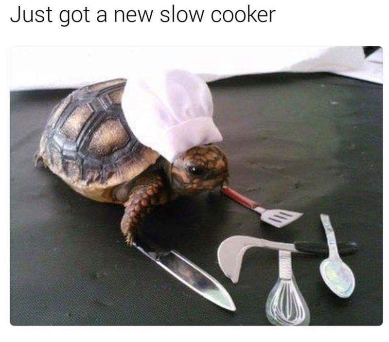 Tortoise - Just got a new slow cooker