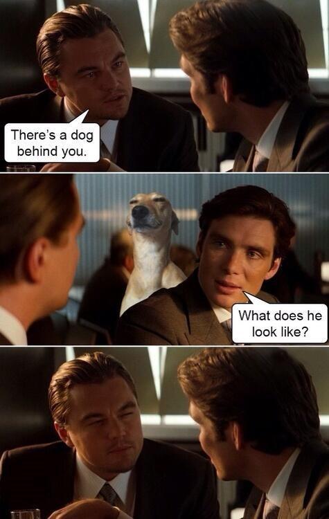 Memes doggo - 9008949248