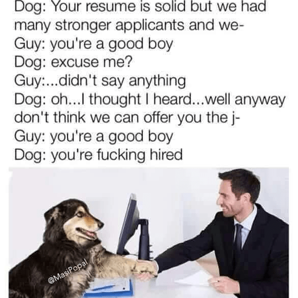 Text - Dog: Your resume is solid but we had many stronger applicants and we- Guy: you're a good boy Dog: excuse me? Guy...didn't say anything Dog: oh...I thought I heard...well anyway don't think we can offer you the j- Guy: you're a good boy Dog: you're fucking hired @MasiPopal
